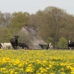 Fietsverhuur in Drenthe